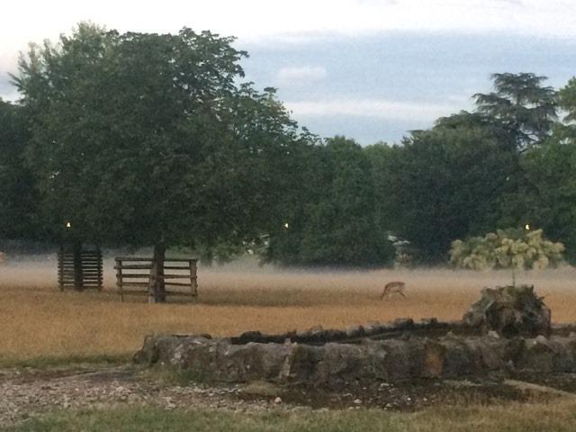 la brume se lève sur le parc aux daims, esprit magique !